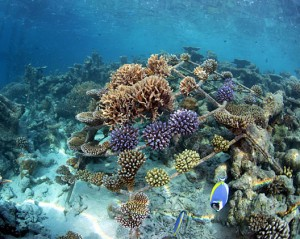Coral Frame